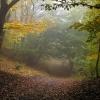 Великолепный буковый лес вдоль Эльх-Кая. Кудрявая Марья, Крым
