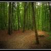 Буковый лес. Крым