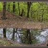 Молодой буковый лес в мае. Крым