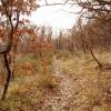 Дубовый лес. Крым