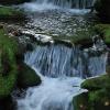 Ручей Воеводин до водопада. Поход Карпаты