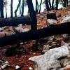 Поход по Турции: Ликийская тропа, путь к поселку Чиралы