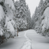 Поход по Карпатам: зимний Кукул