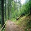Поход в Карпаты: путь к озеру Синевир