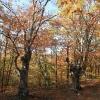 Буковый лес, стоянка Чигенитра. Крым