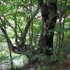 Могучие деревья над рекой. Поход по Крыму. Фото Дмитрия Киселева