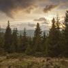 Карпаты поход: Горганские леса, на опушке
