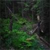 Карпаты поход: Горганские леса