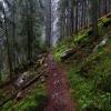Карпаты поход: Горганы, на Сивулю