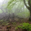 Поход в Крым: водопад Джур-Джур, ущелье Хапхал