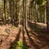 Поход по Закарпатью: Зачарованная долина