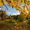 Поход по Закарпатью: Смерека Камень