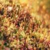 Карпаты пеший поход: карпатская природа