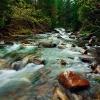 Поход в Карпаты: недалеко от горы Малый Горган