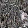 В Тисовом ущелье. Поход Крым