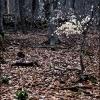 Ранняя весна в Тисовом ущелье. Поход Крым