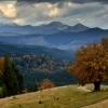 Пеший поход в Карпаты: знаменитый Костричский бук с видом на Горганы