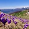 Поход на Говерлу: Вид на хребет Свидовец со склона горы Шешул