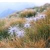 Поход по Карпатам: У подножия горы Туркул