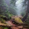 Поход по Черногорскому хребту: лес на подъеме на Поп Иван