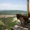 Бесстрашный маленький обитатель монастыря. Поход по Крыму