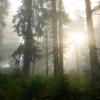 Поход Мармароси: утро в Мармарошском лесу