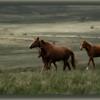 Дикие лошади на Долгоруковке. Поход в Крым