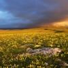 Цветущая Долгоруковская яйла. Поход в Крым