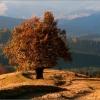 Поход в Карпаты, Кривопольский перевал