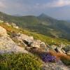 Поход в Карпаты: Утренняя Говерла