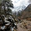 Поход по Непалу: трек вокруг Манаслу, вековые сосны