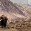 Непал: треккинг вокруг Манаслу, окрестности селения Самдо