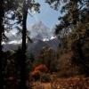 Непал: трек Манаслу, путь к Тильче через лес