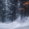 Зимний лес по дороге на Петрос, поход