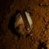 Пещера Монастырь-Чокрак (Су-Тешиги)